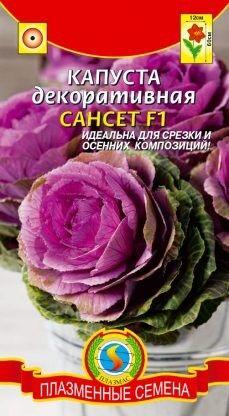 Цветы Капуста декоративная Сансет ЦВ/П (ПЛАЗМА) однолетнее до 90см