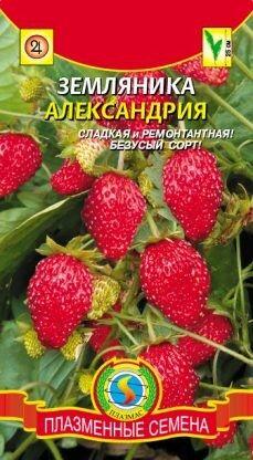 Земляника Александрия ЦВ/П (ПЛАЗМА) 0,04гр ремонтантная безусая