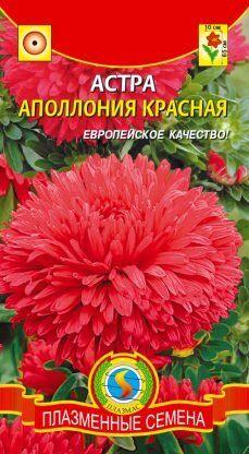 Цветы Астра Апполония Красная ЦВ/П (ПЛАЗМА) хризантемовидная до 65см