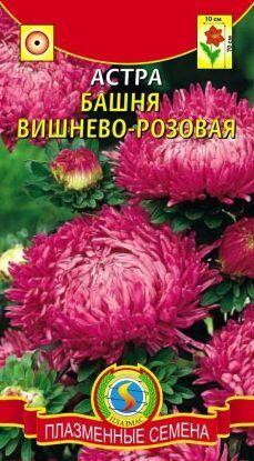 Цветы Астра Башня Вишнёво-розовая ЦВ/П (ПЛАЗМА) пионовидная до 70см