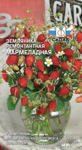 Земляника Мармеладная ЦВ/П (СЕДЕК) 0,04гр ремонтантая безусая