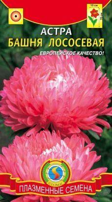 Цветы Астра Башня Лососёвая ЦВ/П (ПЛАЗМА) пионовидная до 70см
