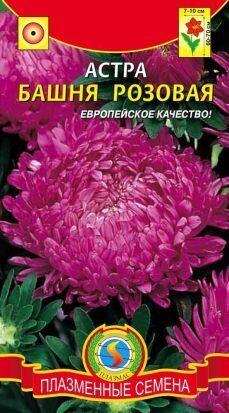 Цветы Астра Башня Розовая ЦВ/П (ПЛАЗМА) пионовидная до 70см