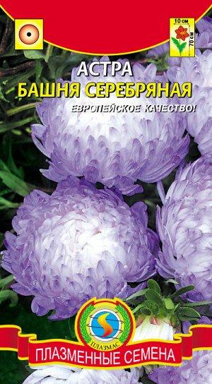 Цветы Астра Башня Серебрянная ЦВ/П (ПЛАЗМА) пионовидная до 70см