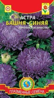 Цветы Астра Башня Синяя ЦВ/П (ПЛАЗМА) пионовидная до 70см