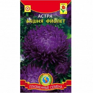 Цветы Астра Башня Фиолетовая ЦВ/П (ПЛАЗМА) пионовидная до 70см