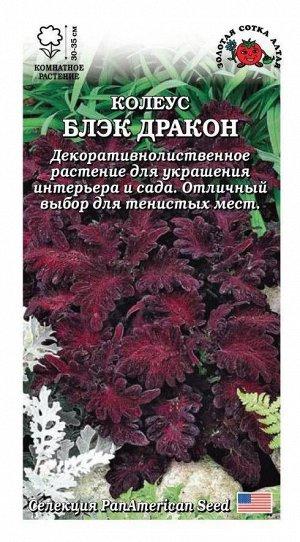 Цветы Колеус Блэк Дракон ЦВ/П (Сотка) комнатное 30-35см