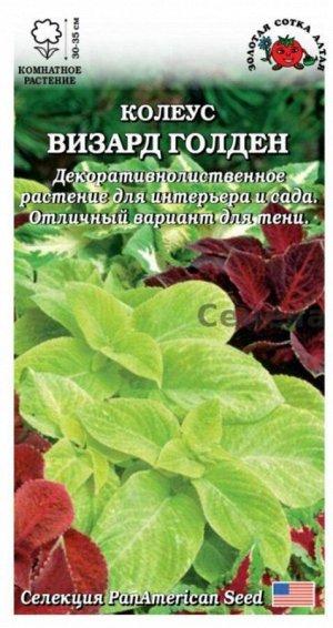 Цветы Колеус Визард Голден ЦВ/П (Сотка) комнатное 30-35см