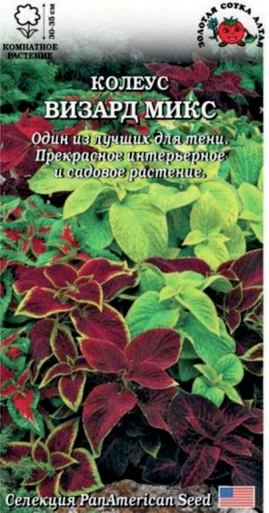 Цветы Колеус Визард Микс ЦВ/П (Сотка) комнатное 30-35см