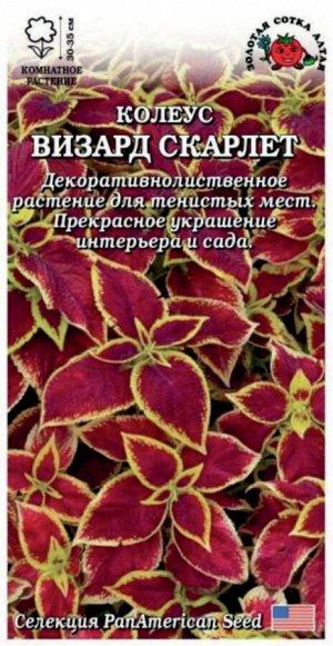 Цветы Колеус Визард СКАРЛЕТ ЦВ/П (Сотка) комнатное 30-35см