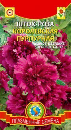 Цветы Шток-роза (Мальва) Королевская Пурпурная ЦВ/П(ПЛАЗМА) РЭМ