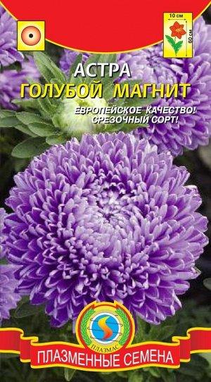 Цветы Астра Голубой Магнит ЦВ/П (ПЛАЗМА) густомахровая до 70см