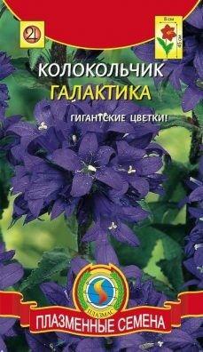 Цветы Колокольчик Галактика ЦВ/П (ПЛАЗМА) синий многолетнее 45см