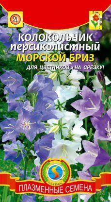 Цветы Колокольчик Морской бриз персиколистный ЦВ/П (ПЛАЗМА) многолетнее до 90см