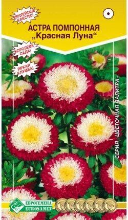 Цветы Астра Красная луна ЦВ/П (ЕС) помпонная до 50см