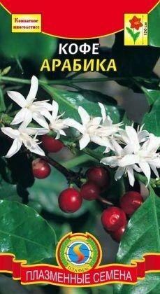 Цветы Кофе Арабика ЦВ/П (ПЛАЗМА) комнатное до 1,5м