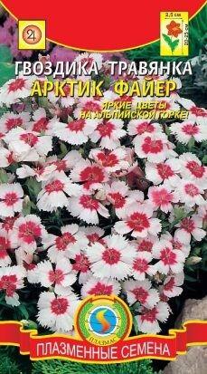 Цветы Гвоздика травянка Арктик файер ЦВ/П (ПЛАЗМА) многолетнее 20-25см