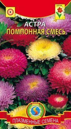 Цветы Астра Помпонная СМЕСЬ ЦВ/П (ПЛАЗМА) 60см