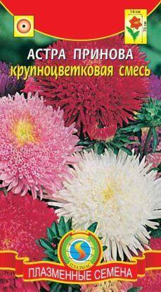 Цветы Астра Принова СМЕСЬ ЦВ/П (ПЛАЗМА) густомахровая гигантская принцесса 60-70см