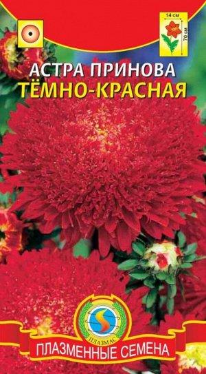 Цветы Астра Принова Тёмно Красная ЦВ/П (ПЛАЗМА) густомахровая гигантская принцесса 60-70см