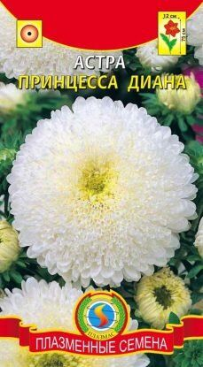 Цветы Астра Принцесса ДИАНА ЦВ/П (ПЛАЗМА) белая густомахровая 70-80см