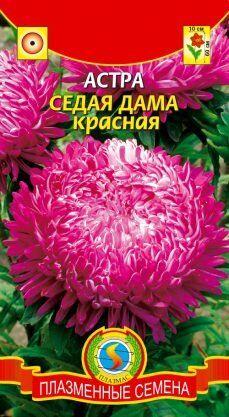 Цветы Астра Седая дама Красная ЦВ/П (ПЛАЗМА) пионовидная 65см