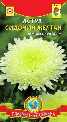 Цветы Астра Сидония Жёлтая ЦВ/П (ПЛАЗМА) принцесса 60-70см