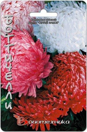 Цветы Астра Старый Замок Боттичелли ЦВ/П (БИО) пионовидная 60-70см