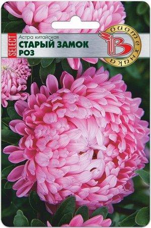 Цветы Астра Старый Замок Розовый ЦВ/П (БИО) пионовидная 60-70см
