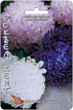 Цветы Астра Старый Замок Роквел Кент ЦВ/П (БИО) пионовидная 60-70см