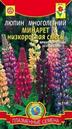 Цветы Люпин Минарет низкорослая смесь ЦВ/П (ПЛАЗМА) многолетнее до 50см