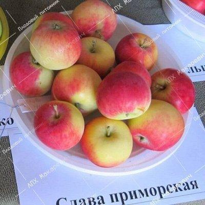 ЛПХ Макаревич-2021-4 Лучшие саженцы в Приморском крае — Яблоня — Плодово-ягодные