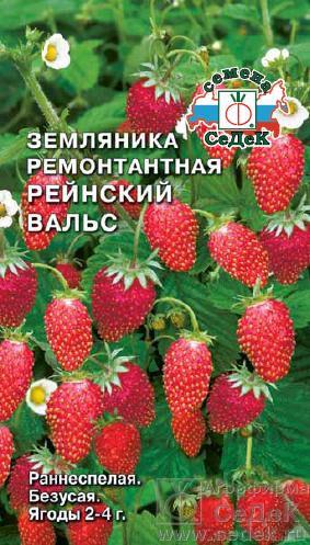 Ягода Рейнский Вальс земляника /Седек/цп