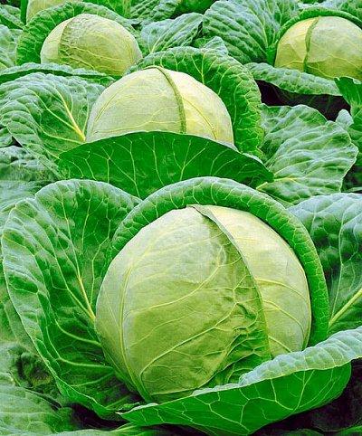 Дачный сезон! НЕ ПРОПУСТИ! Более 2000 видов семян!   — Семена Капусты — Семена овощей