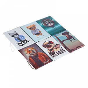 PAVO Обложка для паспорта с отд.для карт, ПВХ, 13,7х9,6см, 2-6 дизайнов, DC2018-2