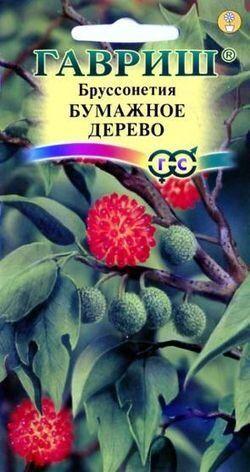 Бруссонетия Бумажное дерево*  3 шт.
