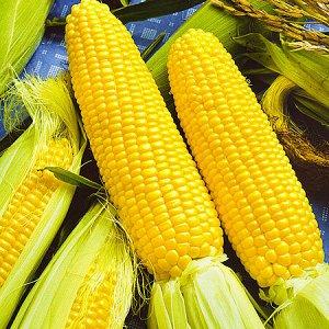 Кукуруза Сеньора 10шт