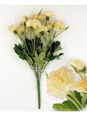Гвоздика бело-розовая кустик 35 см