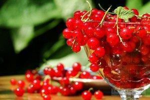 Смородина красная перспективные сорта Сахарная