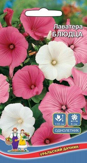 Цветы Лаватера Блюдца (УД) (мощная, кустистая, соцветия 10 см, смесь окрасок)