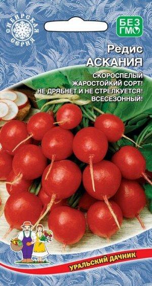Редис Асканья (УД) (скороспелый, эллиптический, ярко-красный, 15-25 г, с белой, хрустящей мякотью)