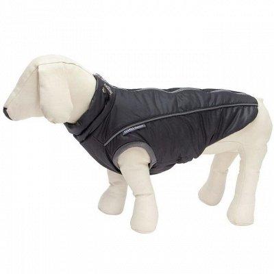 Товары для животных — Одежда для собак