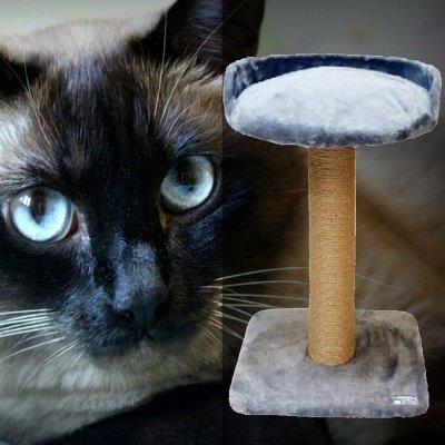 Кошкин дом🐱: сюрприз для киски!  — Когтеточки, домики для кошек — Домики и когтеточки