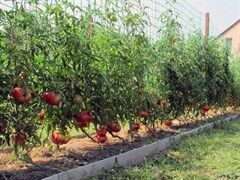 Сетка для томатов Ф-60