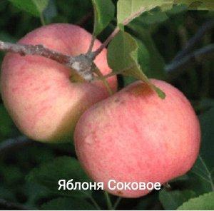 Яблоня Соковое