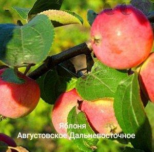 Саженцы яблони Августовское Дальневосточное