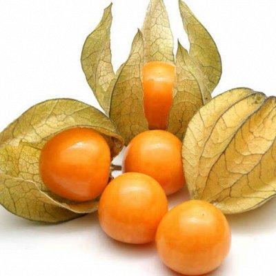 Семена ГАВРИШ- гарантия качества. В пути — ЭКЗОТИКА — Семена овощей