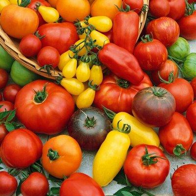 Семена ГАВРИШ- гарантия качества. В пути — ТОМАТ СРЕДНЕРОСЛЫЕ — Семена овощей