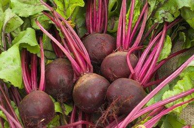 Семена ГАВРИШ- гарантия качества. В пути — СВЕКЛА — Семена овощей