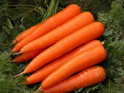 Семена ГАВРИШ- гарантия качества. В пути — МОРКОВЬ — Семена овощей